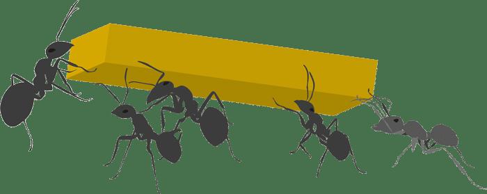 Ameisen die gemeinsam etwas tragen